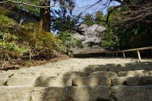 室生寺石段からの桜