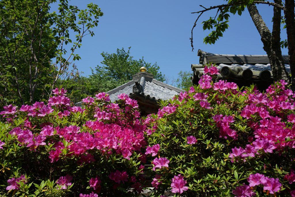 長谷寺下山中の花
