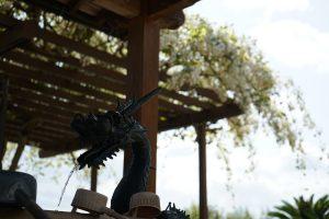 極楽寺手水舎の龍
