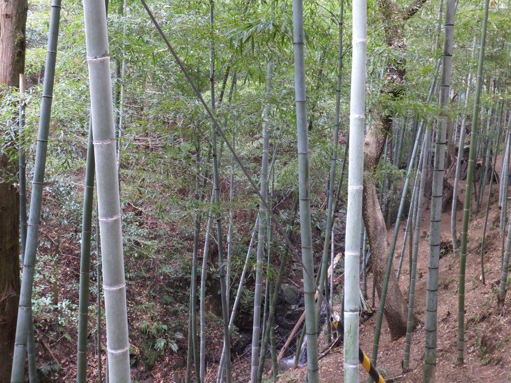 二上山登山口までの道・竹林