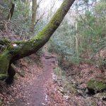 二上山登山道の木