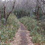 二上山雄岳登山道1