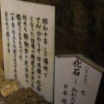 面不動鍾乳洞内部 - 化石看板