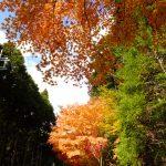 みたらい渓谷の紅葉2