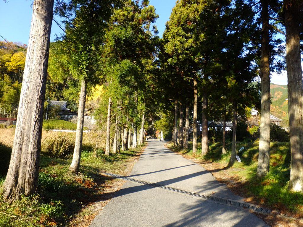 葛城一言主神社の杉並木