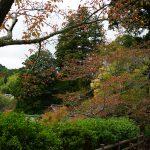 談山神社十三重塔と紅葉3