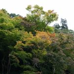 談山神社十三重塔と紅葉4